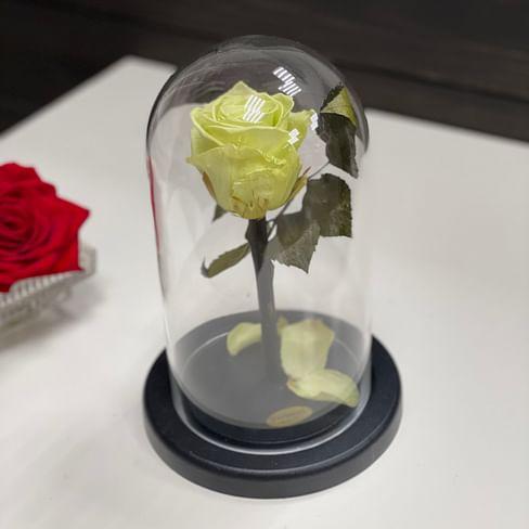 Роза в стеклянной колбе (фисташка) Mini