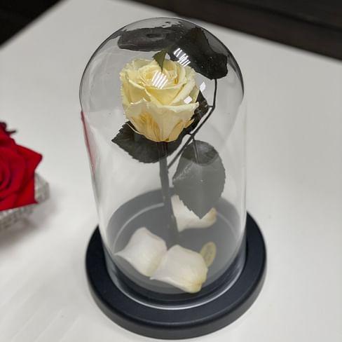 Роза в стеклянной колбе (белая) Mini