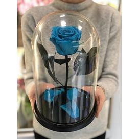 Роза в стеклянной колбе (ярко-голубая) Standart+