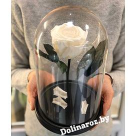 Роза в стеклянной колбе (белая) Standart+