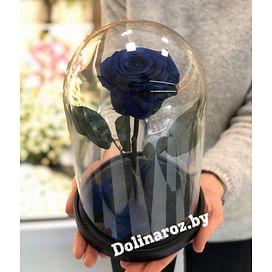 Роза в стеклянной колбе (синяя) Standart+