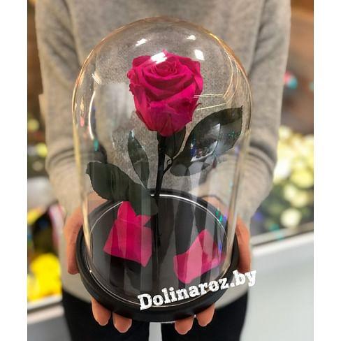 Роза в стеклянной колбе (ярко-розовая) Standart+