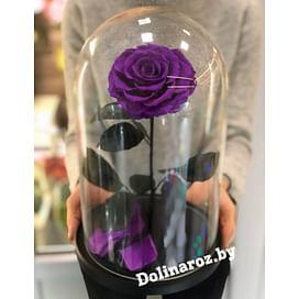 Роза в стеклянной колбе (пурпурная) VIP