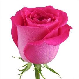 Роза Топаз (Topaz) 55-65 см