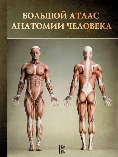 Большой атлас анатомии человека Артикул: 27060 АСТ .