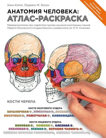 Анатомия человека: атлас-раскраска Артикул: 27609 Эксмо Элсон Л., Кэпит У.