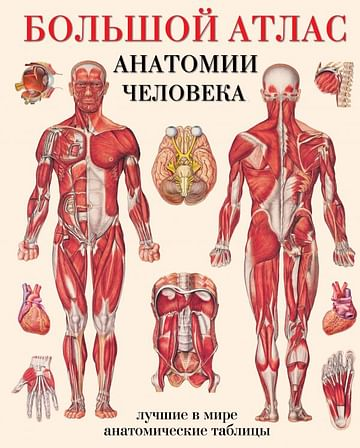 Большой атлас анатомии человека Артикул: 24339 АСТ Махиянова Е.Б.
