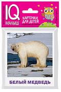 Умный малыш. Животные полярных широт. Набор карточек для детей. Артикул: 85758 Айрис-пресс Ходюшина Н.П.