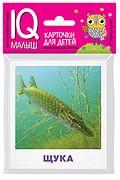Умный малыш. Пресноводные рыбы. Набор карточек для детей. Артикул: 85865 Айрис-пресс Малунова М.В.