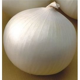 Оризаба F1 (Orizaba F1) семена лука репчатого белого 250 000 семян Seminis/Семинис