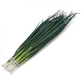 Вулкан семена лука на перо среднераннего темно-зеленого Kitano/Китано