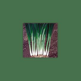 Грин Баннер (Green Banner) семена лука на перо Seminis/Семинис