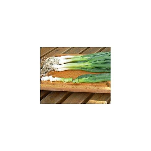 Лонг Уайт Кошигая семена лука на перо 50 грамм Sakata/Саката