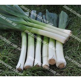Порилюкс семена лука порей 25 грамм Hazera