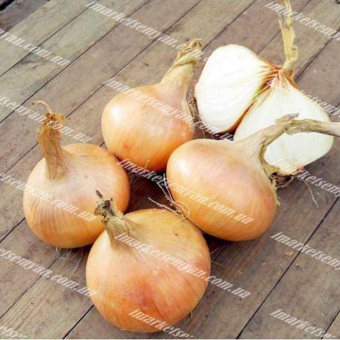 Миюки F1 семена лука репчатого озимого раннего 250 000 семян Enza Zaden/Энза Заден