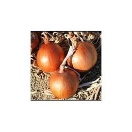 Имаго F1 семена лука репчатого озимого среднего 250 000 семян Hazera