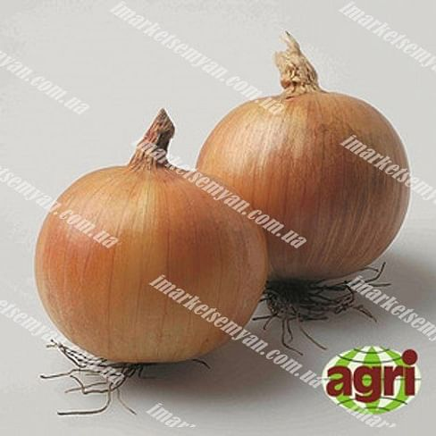 Роксен F1 семена лука репчатого озимого Agri Saaten