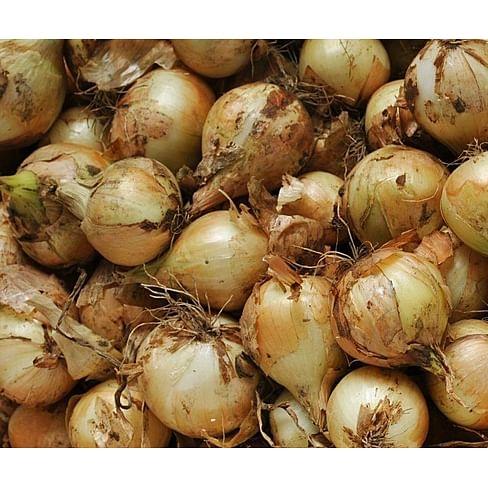 Булат семена лука репчатого озимого Lucky Seed