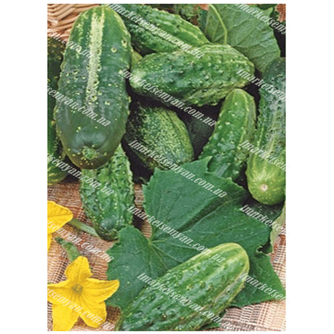 Семена огурца Шакти 100 грамм PPZ Seeds