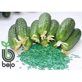 Амур F1 семена огурца партенокарпического Bejo/Бейо