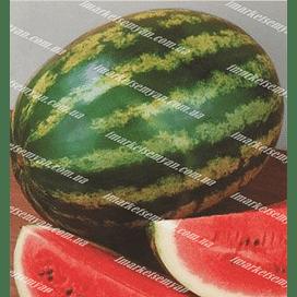 АУ Продюсер семена арбуза тип Кримсон Свит среднераннего Agri Saaten