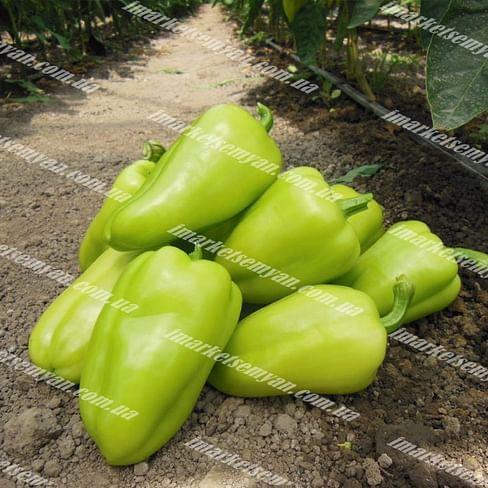 Амаретта F1 семена перца сладкого тип Венгерский раннего 500 семян Enza Zaden/Энза Заден