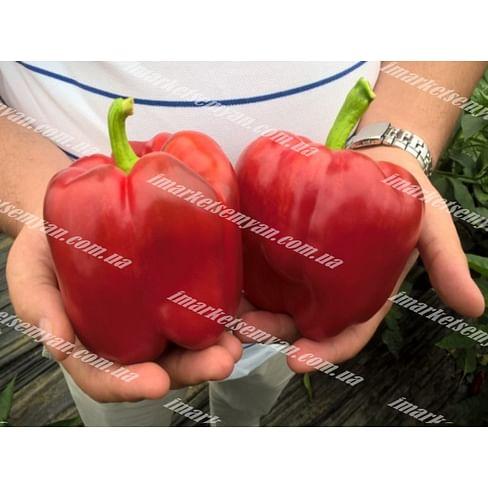 Прокрафт F1 семена перца сладкого тип Блочный раннего 500 семян Enza Zaden/Энза Заден