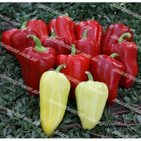 Анетта F1 семена перца сладкого тип Венгерский раннего 500 семян Enza Zaden/Энза Заден