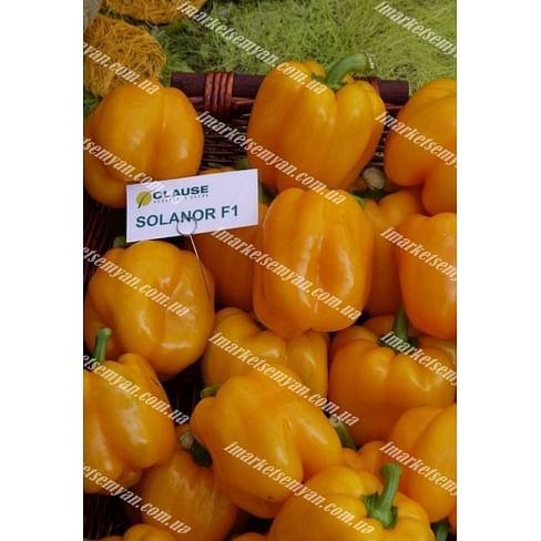 Соланор F1 семена перца сладкого тип Блочный среднего 1 000 семян Clause/Клоз