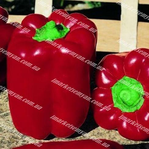 Вивальди F1 семена перца сладкого тип Ламуйо раннего 1 000 семян Vilmorin/Вилморин