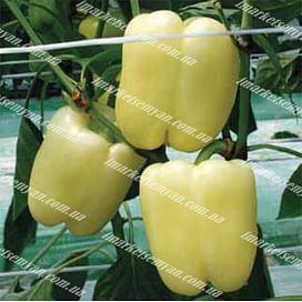 Сильвер Бел F1 семена перца сладкого тип Ламуйо среднего NongWoo Bio