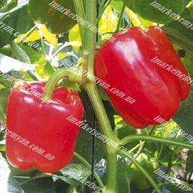 Синдерелла F1 семена перца сладкого тип Блочный раннего 8 семян NongWoo Bio