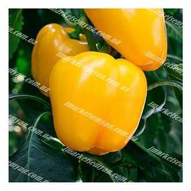 Минерва F1 семена перца сладкого тип Блочный раннего NongWoo Bio