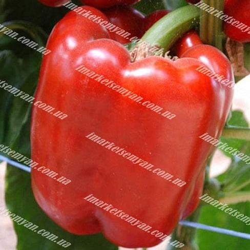 Кримсон Кинг F1 семена перца сладкого тип Блочный раннего Hazera