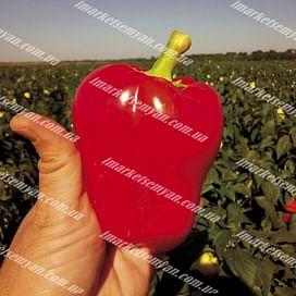 Фиджи F1 (Родна F1) семена перца сладкого раннеспелого LibraSeeds