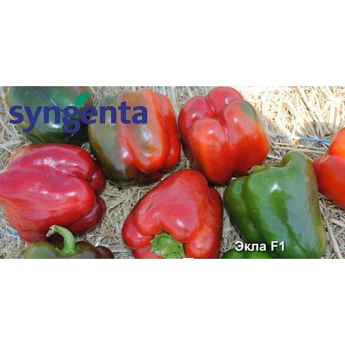 Экла F1 семена перца сладкого раннего Syngenta/Сингента