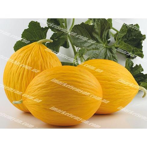 Эгназио F1 семена дыни тип Желтая канарская средней 500 семян Enza Zaden/Энза Заден