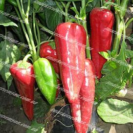 Магус F1 семена перца сладкого 500 семян Lark Seeds/Ларк Сидс