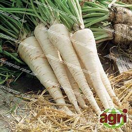 Ланже семена петрушки корневой Agri Saaten