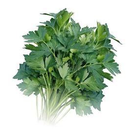 ИТАЛЬЯНСКИЙ ГИГАНТ семена петрушки листовой 500 грамм Griffaton/Грифатон