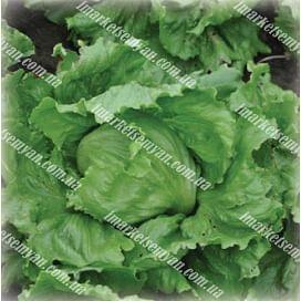 Авирам семена салата тип Айсберг зеленого Hazera