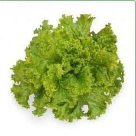 КС 129 семена салата тип Батавия 5 грамм Kitano/Китано