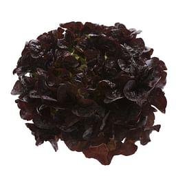 Руксай семена салата Дуболистый темно-красного Rijk Zwaan/Рийк Цваан