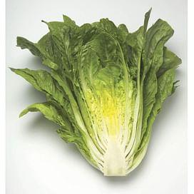 Максимус семена салата Ромэн Rijk Zwaan/Рийк Цваан