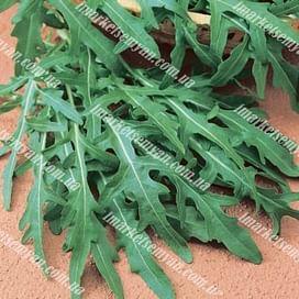 Вайлд Рокет (Руккола дикая) семена зеленого Semenaoptom/Семенаоптом