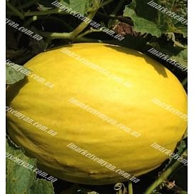 Бабор F1 семена дыни тип Желтая Канарская ранней 1 000 семян Clause/Клоз