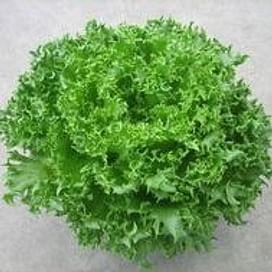 Финстар семена салата тип Фриллис раннего дражированные Nunhems