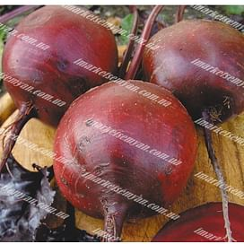 Бордо семена свеклы столовой средней Semenaoptom/Семенаоптом