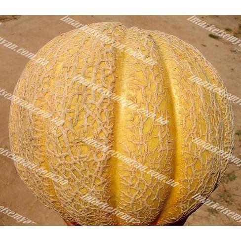 Суперстар F1 семена дыни тип Итальянская сетчатая ранней (НЕТ ТОВАРА) Clause/Клоз