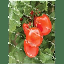 Семена томата детерминатного Дораль среднеспелого 100 грамм PPZ Seeds